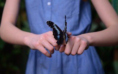 Dal bruco alla farfalla: una crescita armoniosa